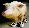 Piggo avatar